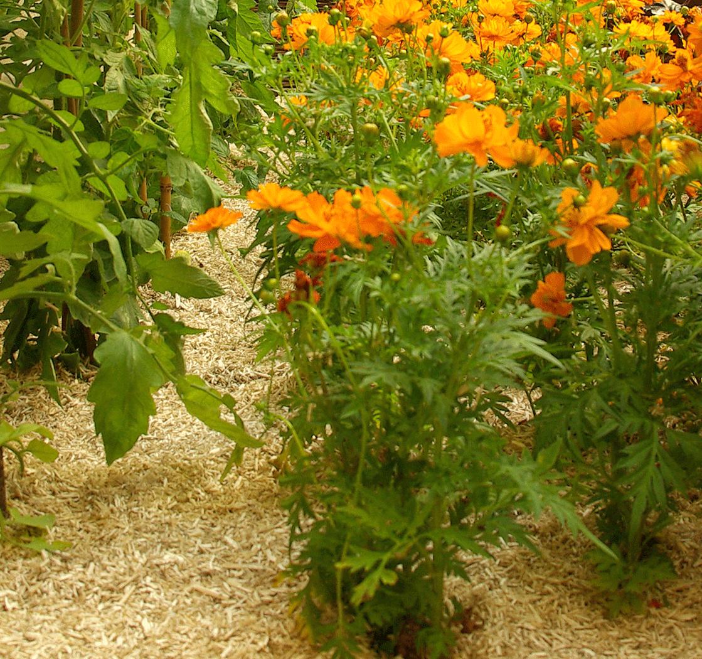paillage-plantation-feeling-jardins-saône-et-loire